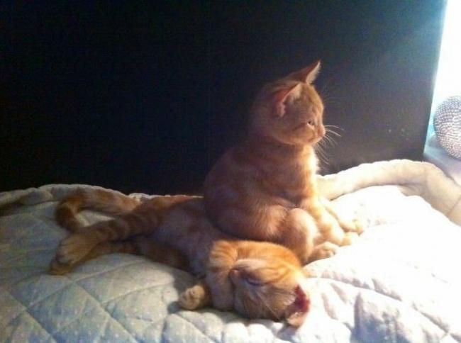 20 шикарных фотографий, в которых вся суть котов